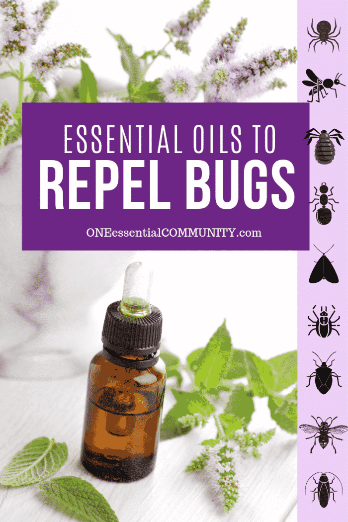 Top 10 essential oils to keep bugs away + lots of DIY recipes to repel bugs (homemade bug spray, natural mosquito repellent, rollerball recipe, mosquito candle, bug diffuser blend, and more) to get rid of spiders, ants, fleas, ticks, flies, mosquitoes, gnats, no-see-ums, wasps, weevils, moths, cockroaches, bed bugs, beetles, aphids, chiggers, earwigs, fruit flies, head lice, silverfish and more. {easy essential oil recipes, natural DIY, doTERRA, Young Living, Plant Therapy}